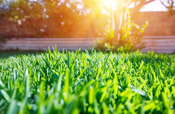 landscapingdesign